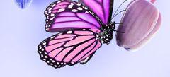 поиграть в Бабочки online