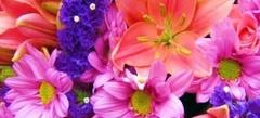 все Цветы online