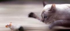 только клевые игры мышки кошки