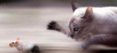 хороший сайт игры мышки кошки