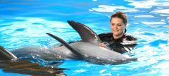 клевые онлайн игры - игры с дельфинами