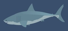 поиграть в онлайн игры - Акулы