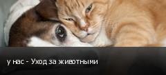 у нас - Уход за животными