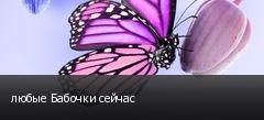 любые Бабочки сейчас