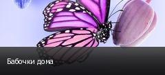 Бабочки дома