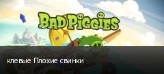 клевые Плохие свинки