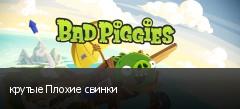 крутые Плохие свинки