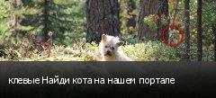 клевые Найди кота на нашем портале