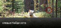 клевые Найди кота