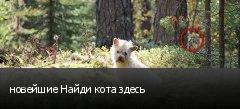 новейшие Найди кота здесь