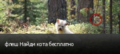 флеш Найди кота бесплатно
