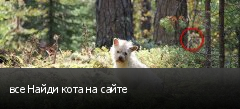 все Найди кота на сайте