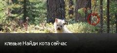 клевые Найди кота сейчас