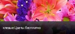 клевые Цветы бесплатно
