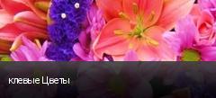 клевые Цветы