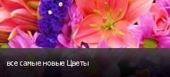 все самые новые Цветы