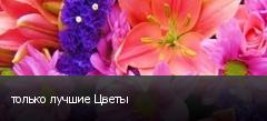 только лучшие Цветы