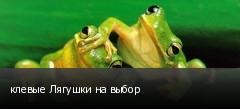 клевые Лягушки на выбор