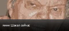 мини Шакал сейчас