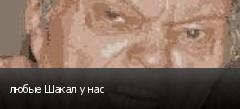любые Шакал у нас