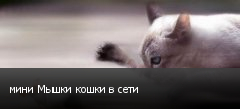 мини Мышки кошки в сети