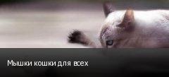 Мышки кошки для всех