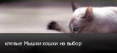 клевые Мышки кошки на выбор