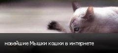 новейшие Мышки кошки в интернете