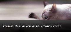 клевые Мышки кошки на игровом сайте