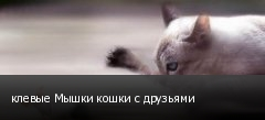 клевые Мышки кошки с друзьями