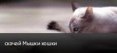 скачай Мышки кошки