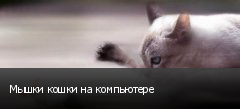 Мышки кошки на компьютере