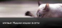 клевые Мышки кошки в сети