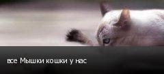 все Мышки кошки у нас