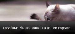 новейшие Мышки кошки на нашем портале