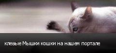 клевые Мышки кошки на нашем портале