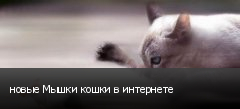 новые Мышки кошки в интернете