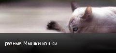 разные Мышки кошки