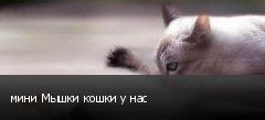 мини Мышки кошки у нас