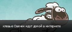 клевые Овечки идут домой в интернете