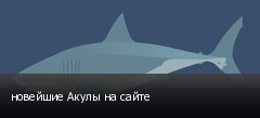 новейшие Акулы на сайте