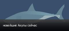 новейшие Акулы сейчас