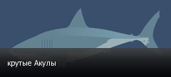 крутые Акулы