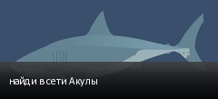 найди в сети Акулы