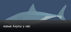 новые Акулы у нас