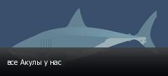 все Акулы у нас
