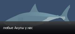 любые Акулы у нас