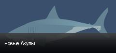 новые Акулы