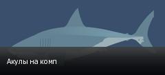 Акулы на комп
