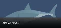 любые Акулы